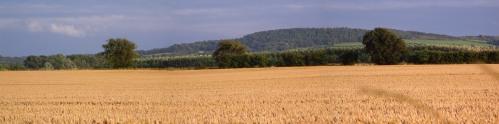 Harrock Hill - harvest 2009