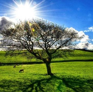 treeoflifepic